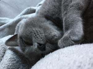 Katzen pflegeleichte Hausitere: Wie beschäftigt man sie
